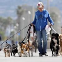 Действующие правила выгула собак