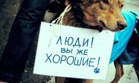 ответсвнность за жестокое обращение с животными