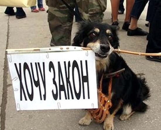 уголовное законодательство в защиту животных